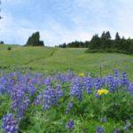 flowers on a meadow